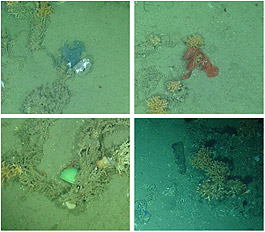 Video stills of plastic litter on the seabed