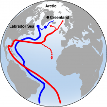 A schematic of the meridional overturning circulation where red lines show the northward flowing warm waters, and the blue lines, the deep water formed through open ocean convection