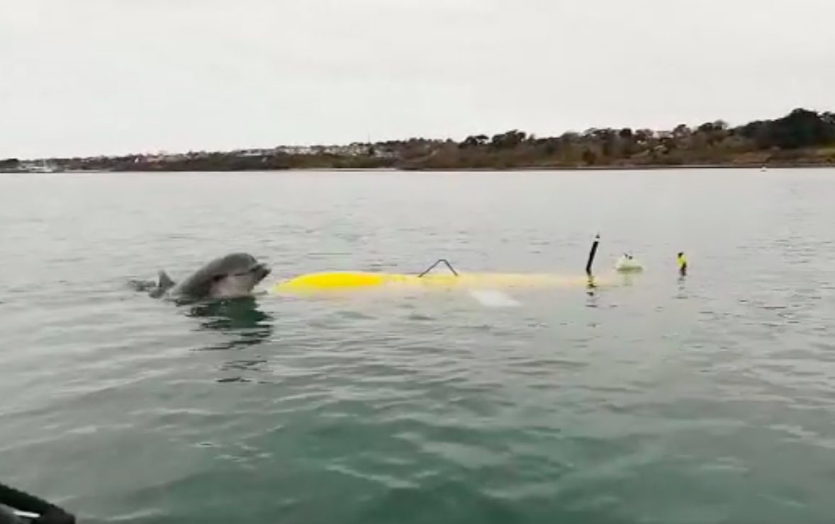 The harbour acceptance trial wasn't just of interest to engineers and scientists. The serious business of testing innovative ocean robots was irresistible for one keen observer – a bottlenose dolphin paid a visit and appeared curious about this new addition to the harbour's waters.