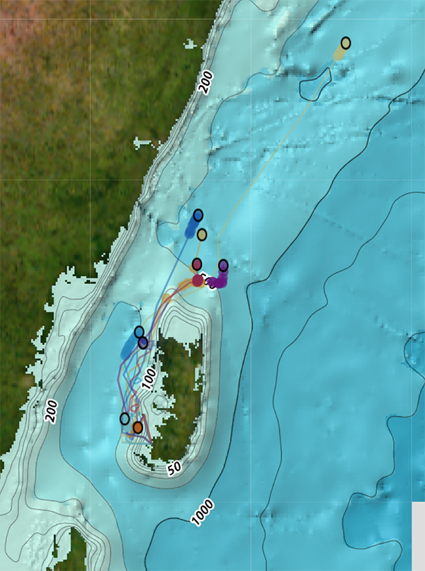 The drifters being tracked by GPS in the Pemba Channel