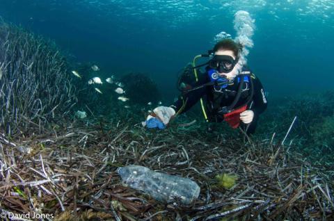 Marine Life Talks