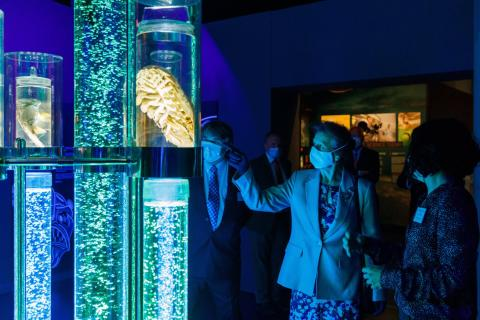 Image from @TheNMMC on Twitter HRH The Princess Royal with NOCs Ed HIll and Tammy Horton in the monsters of the deep exhibition