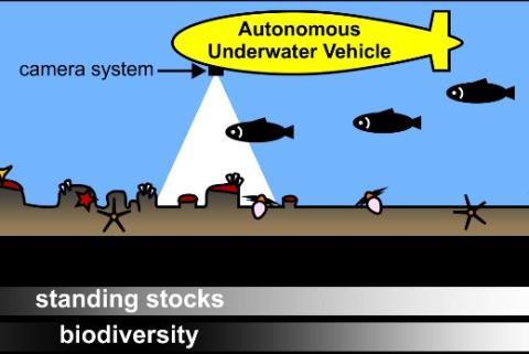 Photographic survey by autonomous underwater vehicle