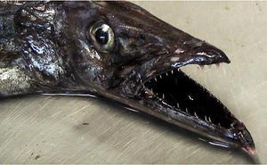 A Scabbardfish