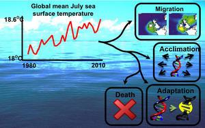 The physiology of climate change