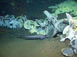 Whale-fall on the seafloor