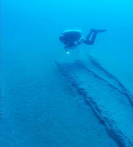 Tthe life aquatic (image: Daniel Riordan)