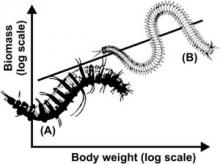 Seabed community biomass seems to increase continuously with individual body weight