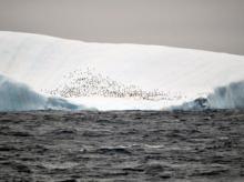 Climate change reality? (photo by Jeff Hawkins 2011)
