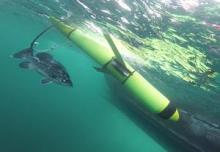 Submarine glider being recovered, accompanied by a rare Atlantic Wreckfish