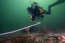 Monitoring by divers (credit: Henrik Stahl of SAMS)