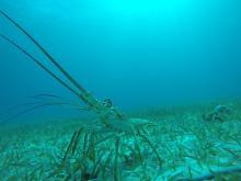 Marine Life Talk