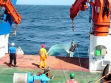 OTSB (Otter Trawl Semi Balloon) deployment