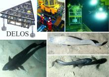 The DELOS project is well matched with the NOC's deep-ocean observation programme.