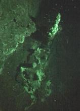 Frame grab from SHRIMP footage of 3-metre high active chimney