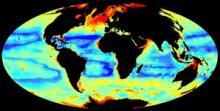 Global seafloor invertebrate biomass (image: Dan Jones, NOC; data courtesy Chih-Lin Wei, Dept. of Oceanography, Texas A&M Univ.)